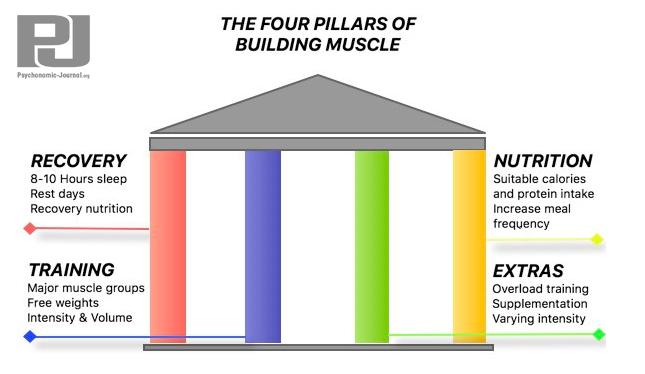 3 pillars of bodbuilding
